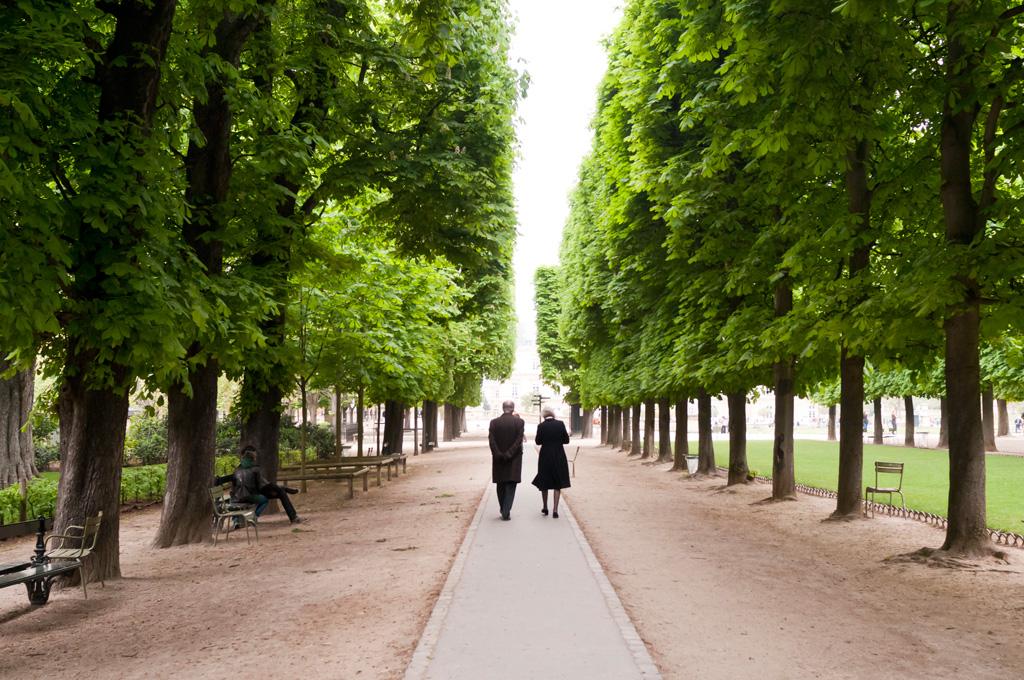 les arbres parisiens myrealparis. Black Bedroom Furniture Sets. Home Design Ideas